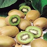 Kiwi Pflanze - 1 strauch