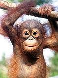 Baby Animals - Die sch?nsten Fotos afrikanischer Tierkinder in einem Buch vesammelt (Deutsch, Englisch, Franz?sisch) - 14,6x18,7 cm, 160 Seiten