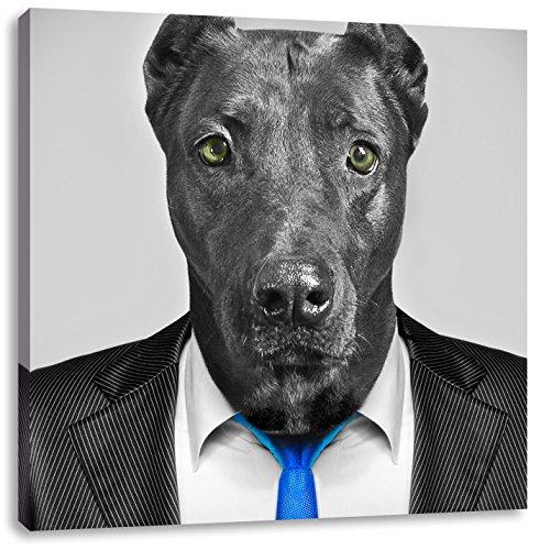 Labrador im Anzug schwarz/weiß, Format: 40x40 auf Leinwand, -