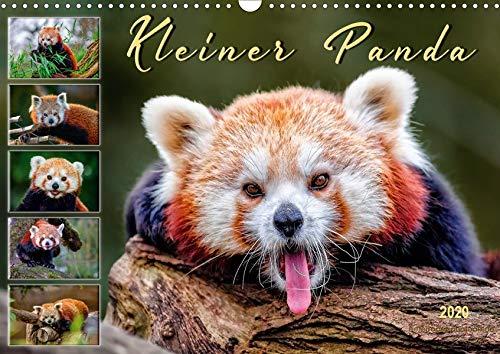 Kleiner Panda (Wandkalender 2020 DIN A3 quer)