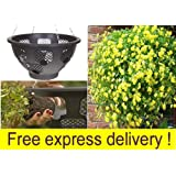 """2 x Plantopia Easy Fill Hanging Baskets / Planters, Black 14"""" complete with fountain watering device"""