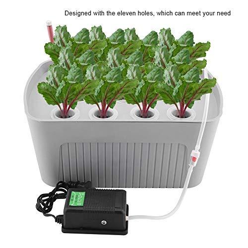 Zerodis Indoor Hydroponics Grower Kit 11 Löcher Hydroponik System Pflanze Blume Pflanzbehälter Tiefwasser Soilless Kultur Box für Home Office Küche(Grau)