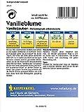 Heliotropium arborescens Vanilleblume Vanillezauber