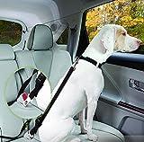 ALAMP Hundeleine mit Halsband langlebig und verstellbar Nylon Hunde-Führleine Retrieverleine Set für mittlere und große Hunde