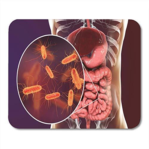 Menschliche Verdauungssystem (Luancrop Mauspads Darm-Mikrobiom 3D, das Anatomie des menschlichen Verdauungssystems zeigt Mausunterlage für Notizbücher, Tischrechnermatten Bürozubehöre)