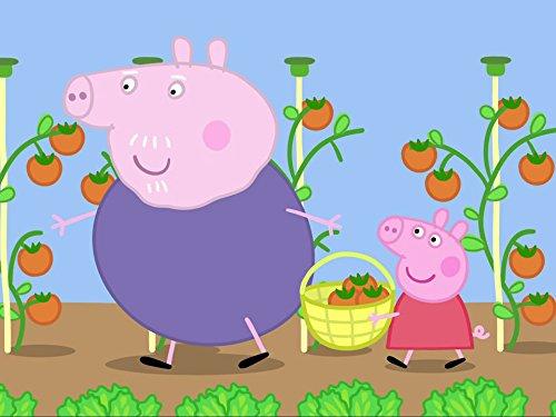 schweinchen-in-der-mitte-salat