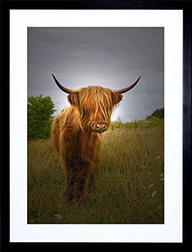 photo-farm-animal-highland-cow-calf-scotland-frame-art-print-picture-f12x816