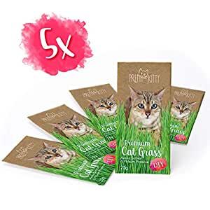PRETTY KITTY Sachets de graines d'herbe à Chat; Sachet de semence de Menthe aux Chats pour Plusieurs Pots (5X 25g d'herbe à Chat)