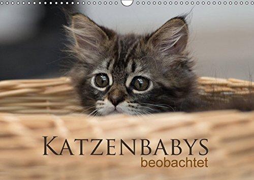 Katzenbabys beobachtet (Wandkalender 2017 DIN A3 quer): Dreizehn zauberhafte Bilder der süßen Katzenbabys. Mit der Kamera beobachtet, machen sie viel ... (Monatskalender, 14 Seiten ) (CALVENDO Tiere)