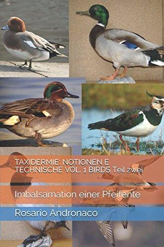 TAXIDERMIE: NOTIONEN E TECHNISCHE VOL. 1 BIRDS Teil zwei: Imbalsamation einer Pfeifente (Vögel, Band 2)