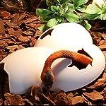 ThinkPet Plastic Reptile Shelter Hiding Cave Habitat Aquarium Ornament Broken Dinosaur Eggs 14