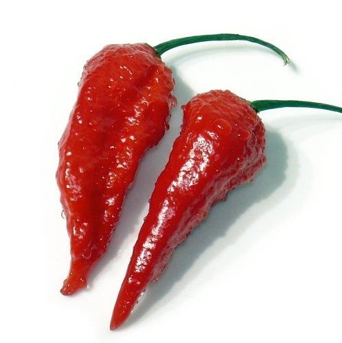 Bhut Jolokia (Naga Jolokia) - extrem scharfes Chili rot - 10 Samen