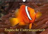 Tropische Unterwasserwelt (Wandkalender 2019 DIN A4 quer): Tropische Fische in faszinierenden Unterwasserfotos (Monatskalender, 14 Seiten ) (CALVENDO Tiere)