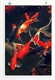 Eau Zone Home Bild - Tierbilder – Wunderschöne Rote und orange Koi Karpfenfische - Poster Fotodruck in höchster Qualität