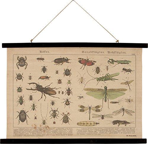 stampa-storica-da-parete-su-tela-100-lino-con-doghe-in-legno-coleotteri