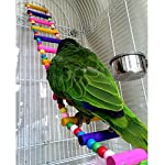 Rope Ladder Rainbow Bridge Bird Toy 27 Inch 9