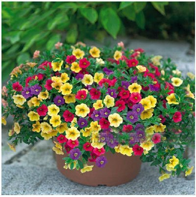 Pinkdose® Pinkdose Blumensamen: Petunia Container Mix für Terrasse und Küche Gartenarbeit (8 Pakete) Garten Pflanzensamen von -