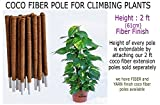 #4: COCO FIBER EXTENDABLE CLIMBER POLE FOR CREEPERS AND CLIMBING PLANTS- Eco friendly product- 2 ft (61 CM) height- FIBER FINISH- 4 Pcs