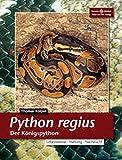 Python regius. Der Königspython