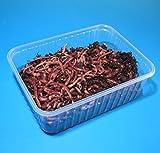 Futterwürmer - Mittel - 100 Stück in BigBox