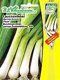 Lauchzwiebel Feast Zwiebel Allium Bunchingzwiebel