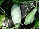 Luffa Cylindrica, Schwammgurke, Sponge Gourd, 10 Samen, von unserer ungarischen Farm samenfest, nur natürliche Dünger, KEINE Pesztizide