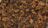Japanische Seidenraupenpuppen 1 kg