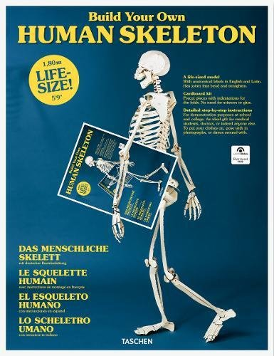 Build your own Human Skeleton. Ediz. inglese, francese e tedesca