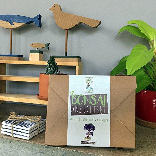 satte saat bonsai anzuchtset z chte vier bonsaib ume mit kologisch abbaubaren pflanzt pfen. Black Bedroom Furniture Sets. Home Design Ideas