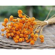 Ramos de flores naturales secas de Vasyle, arte natural brasileño, objetos de decoración naranja