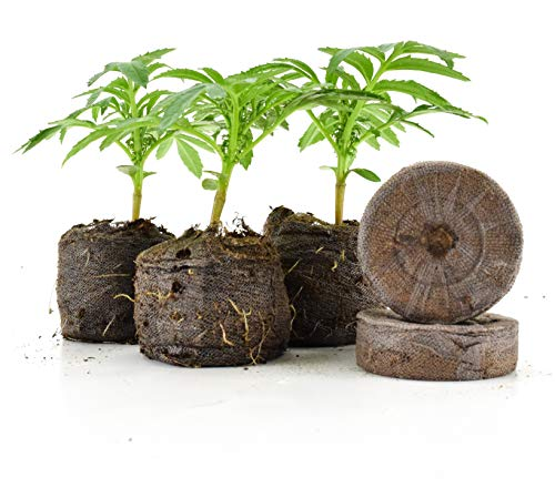 Gardentrends Jiffy Medium Pellets-dehnt Sich bis zu 1-1/5,1cm Durchmesser (36mm) X 1-5/20,3cm Hoch Medium Schock