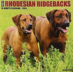 Just Rhodesian Ridgebacks 2019 Wall Calendar