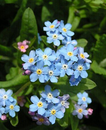 Promozione! 200 semi / pack Semi di combinazione perenne fiore piantare semi Fiore di campo misti Aromatico fragrante, # ZY4HSU