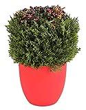 Kunstpflanze Beerenmix Thuja Künstlicher Lebensbaum
