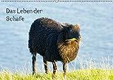 Das Leben der Schafe (Wandkalender 2019 DIN A2 quer): Nutztiere (Monatskalender, 14 Seiten ) (CALVENDO Tiere)