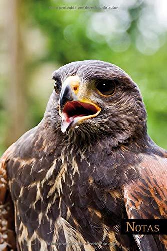 Notas: Abejorro del desierto, Harris Hawk, cetrería, regalo para ornitólogos, biólogos, regalo para el cetrero. En idioma alemán, tamaño A5, 120 ... gris claro. Cuaderno para muchas ocasiones