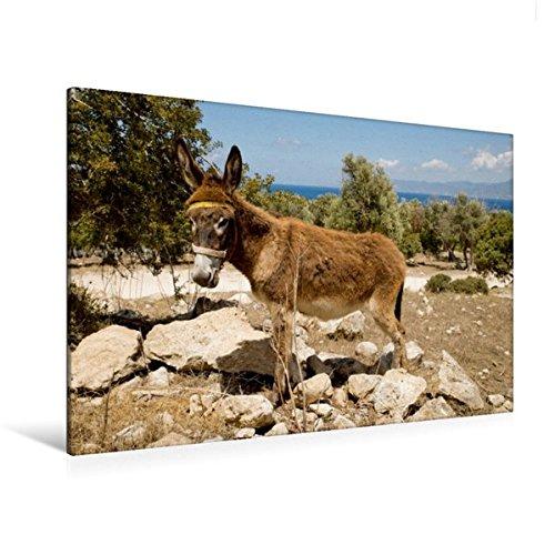 Preisvergleich Produktbild Premium Textil-Leinwand 120 cm x 80 cm quer, Esel an der Küste in der Nähe von Polis | Wandbild, Bild auf Keilrahmen, Fertigbild auf echter Leinwand, Leinwanddruck (CALVENDO Orte)