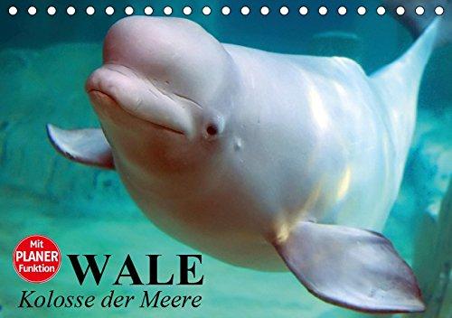 Wale. Kolosse der Meere (Tischkalender 2019 DIN A5 quer): Die geheimnisvollen Riesen der Meere (Geburtstagskalender, 14 Seiten ) (CALVENDO Tiere)