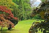 Forwall Fototapete Blue Back Wanddeko Natur Baum -...
