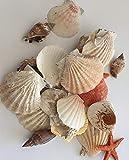 hibuy 220g Muscheln gemischt, Muschelsortiment zum Dekorieren und Basteln, Muschel Sortiment, ca 25 Teile Muschelmix