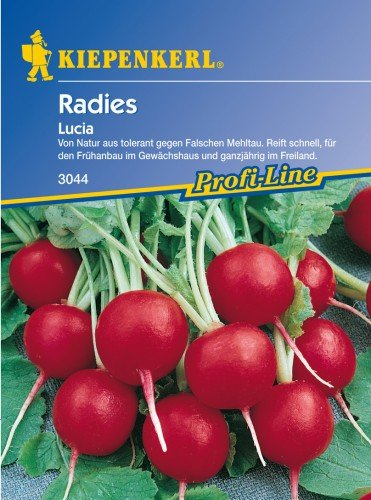 Radieschen Lucia