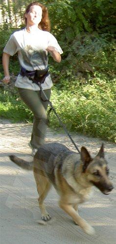 110JO/2 Jogginggurt Jogging Leine Julius K9® Größe 2 für Hunde ab 25 Kg – K-9 - 2