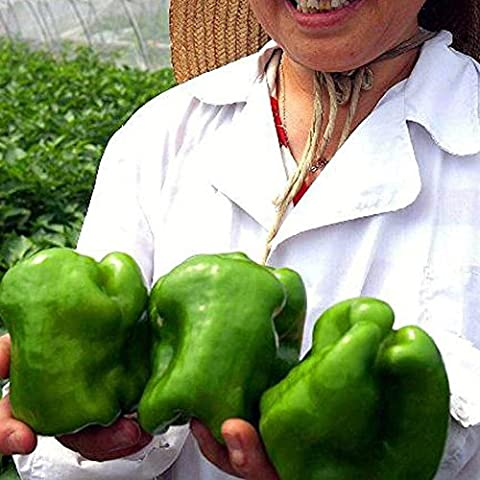 150pcs 16 colore misto Giallo Rosso Verde Bianco Mix dolce campana Hot Pepper Seeds Vegetables Paprika Seed * piante Casa Giardino Chilli