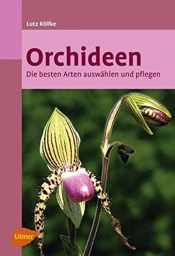 Orchideen Exoten fürs