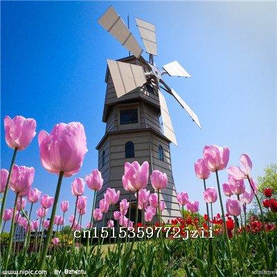 Graines Grande vente Nouvelle arrivée 12 couleurs 200 mix tulipe odorante Graines vivace Fleur pour Jardin en Bonsai