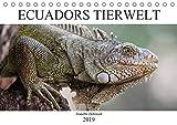 Ecuadors Tierwelt (Tischkalender 2019 DIN A5 quer): Die faszinierende Tierwelt in Ecuador - die schönsten Bilder in einem Kalender (Monatskalender, 14 Seiten ) (CALVENDO Tiere)
