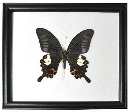 Wilai Schmetterling im Bilderrahmen,Red Helen