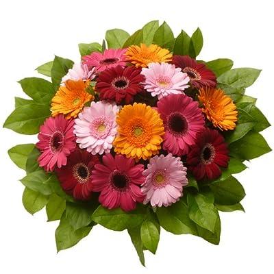 Blumenversand - Blumenstrauß - zum Geburtstag - Farbpracht - mit 16 bunten Mini - Gerbera - mit Gratis - Grußkarte zum Wunschtermin verschicken von Der Renner - Blumenversand - Du und dein Garten