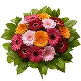 Blumenversand - Blumenstrauß - zum Geburtstag - Farbpracht - mit 16 bunten Mini - Gerbera - mit Gratis - Grußkarte verschicken