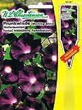 Prunkwinde Winde Wetterleuchten Pharbitis purpurea Kletterpflanze